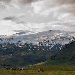 Islandponys vorm Eyjafjallajökull