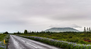 Zwischen Laugarvartn und Selfoss