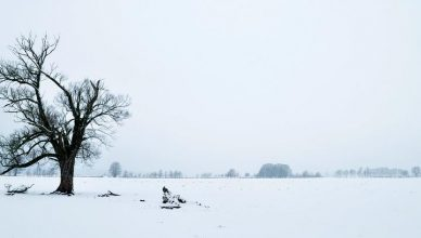 Winterlandschaft in Brandenburg